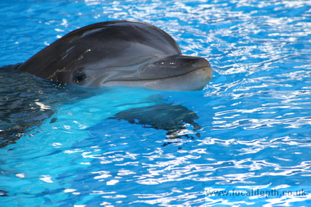 Wildlife - Dolphin