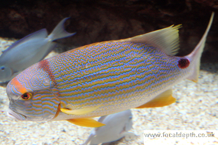 Wildlife - Marine fish