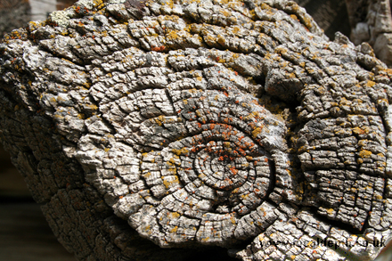 Abstract - Weathered log