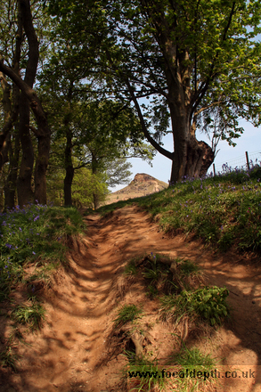 UK - Path through wood toward Roseberry Topping, North Yorkshire