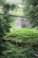 UK - Old derelict barn, with grazing sheep on walk to Gunnerside, Upper Swaledale